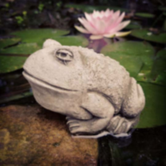 Baby Bullfrog
