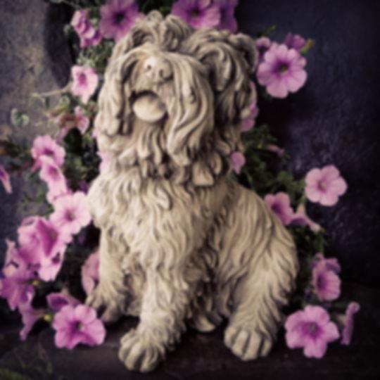 Sitting Terrier