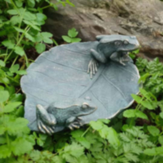 Frogs on Leaf
