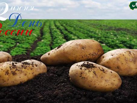 В День России расскажем о нашем национальном продукте. О картошечке. Или не нашем?