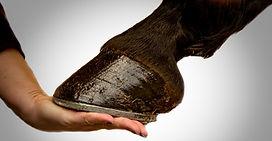 horse-fun-trivia-hooves-keratin-4-7-20.j