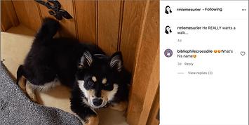 Follow Rachel on Instagram!