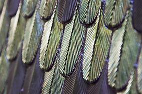 plumage_05.jpg