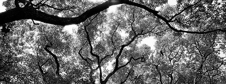 John Demos panoramic_edited_edited.jpg