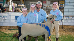 Heritage breed Supreme Champion short wool ewe and Best hindquarter Southdown
