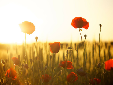 SPECIAL OFFER: Donations to The Royal British Legion & 10% off Elite