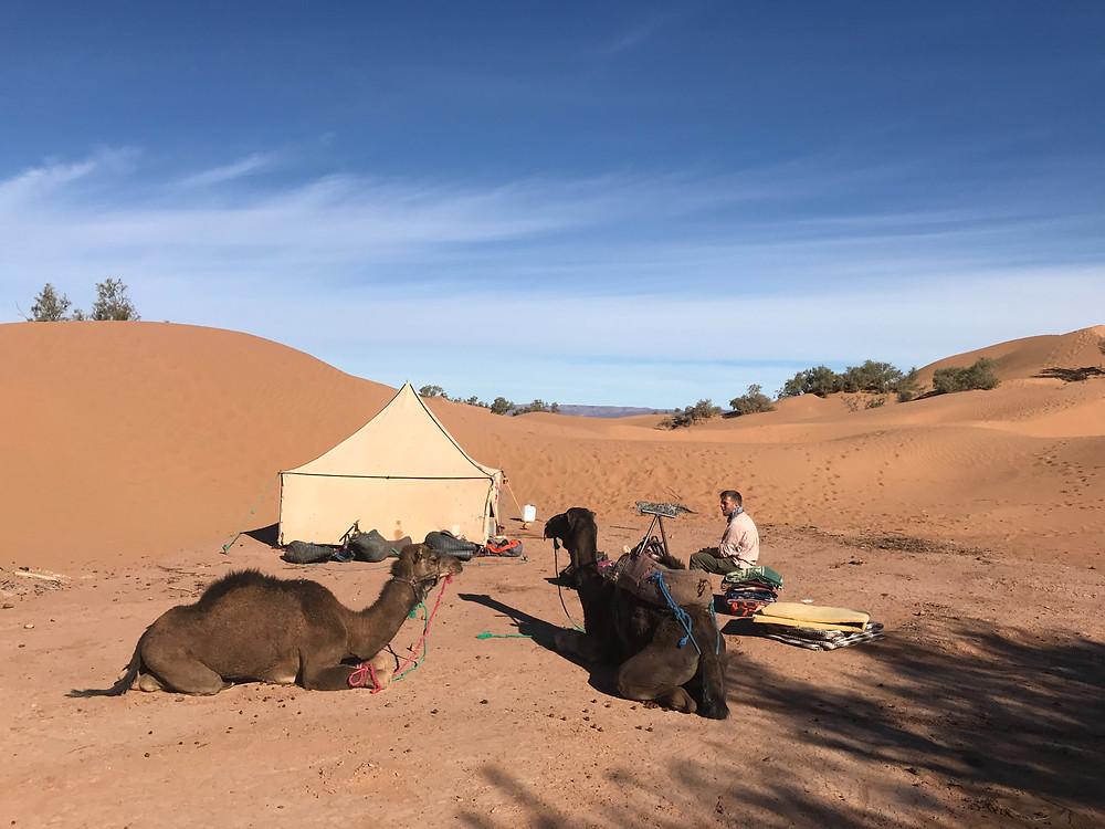 Desert Camp in sand dunes with camels Sahara Desert