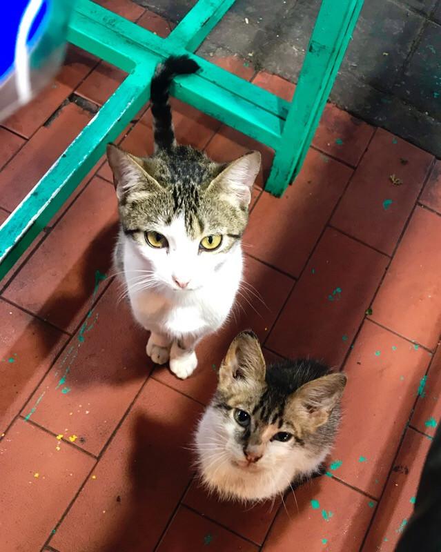 Stray adorable cats in Essaouira Morocco