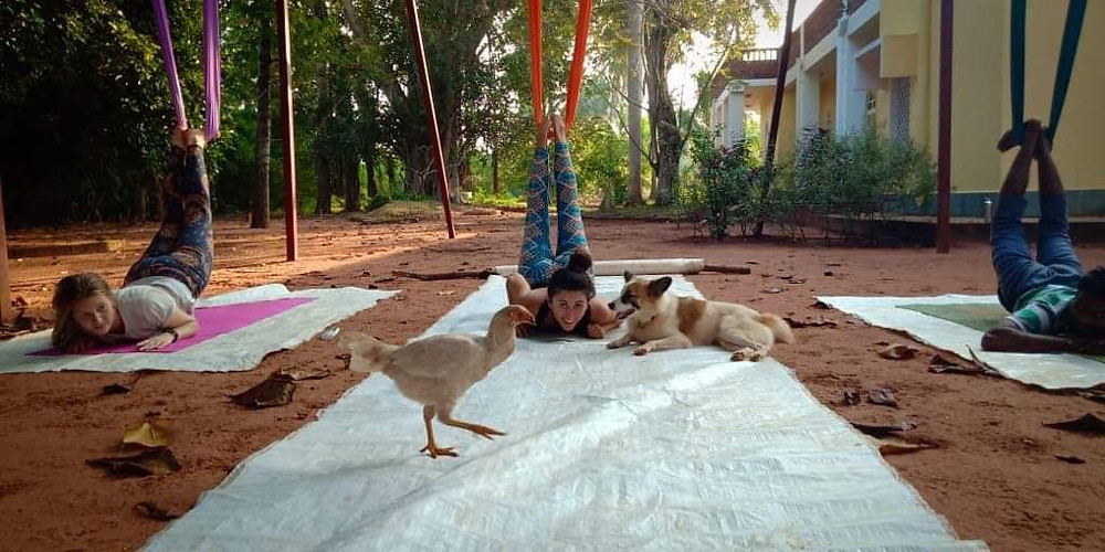 Aerial yoga dog and chicken