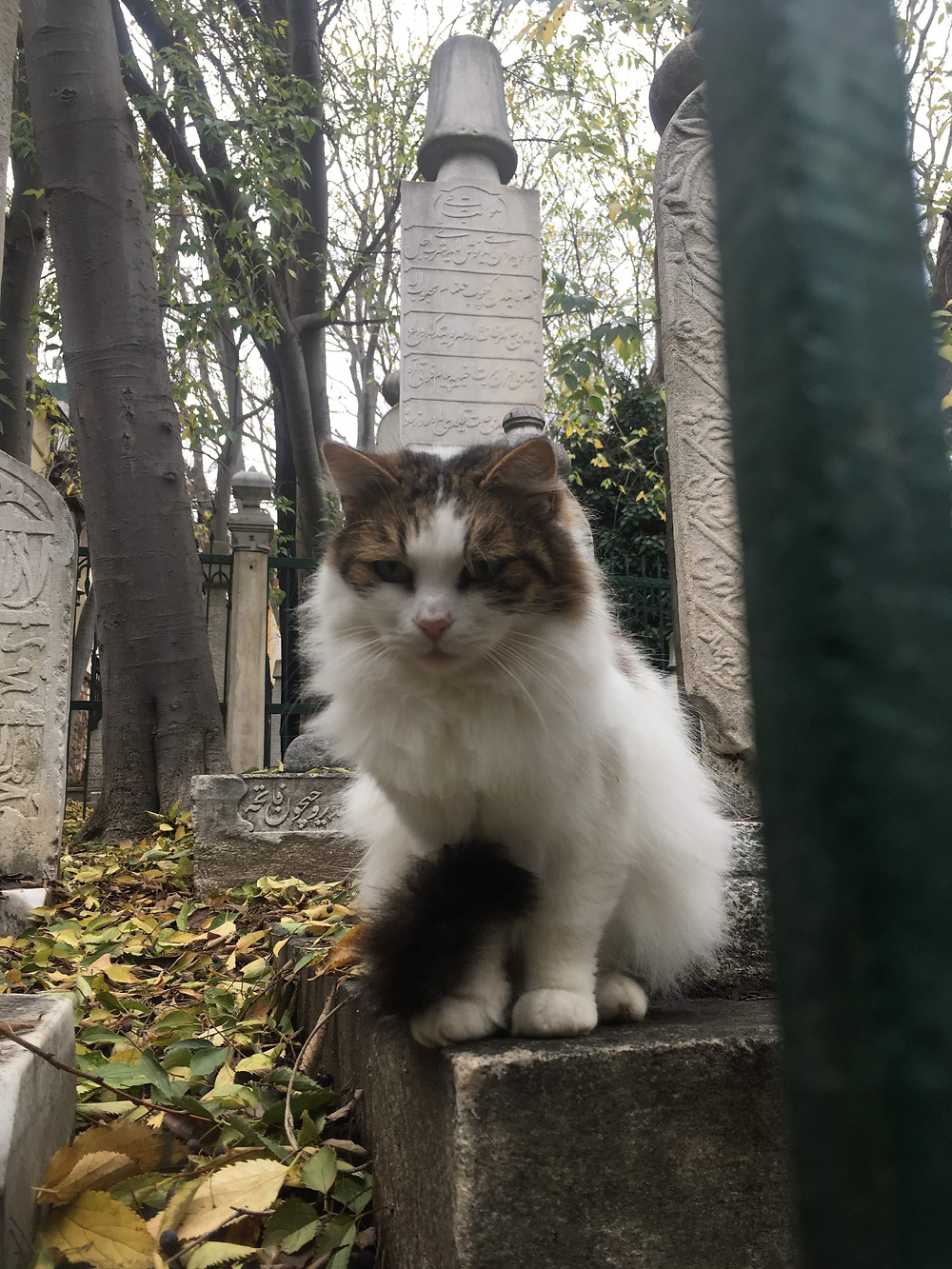 Stray Cats of Istanbul