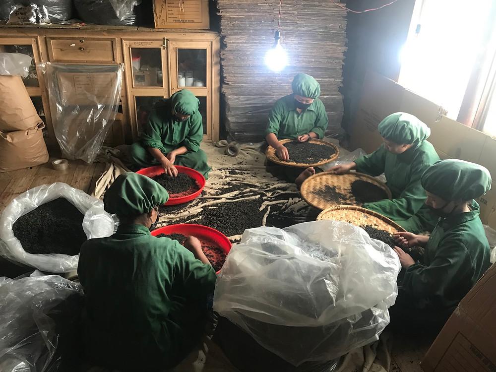 Hand grading tea, Ilam, Nepal