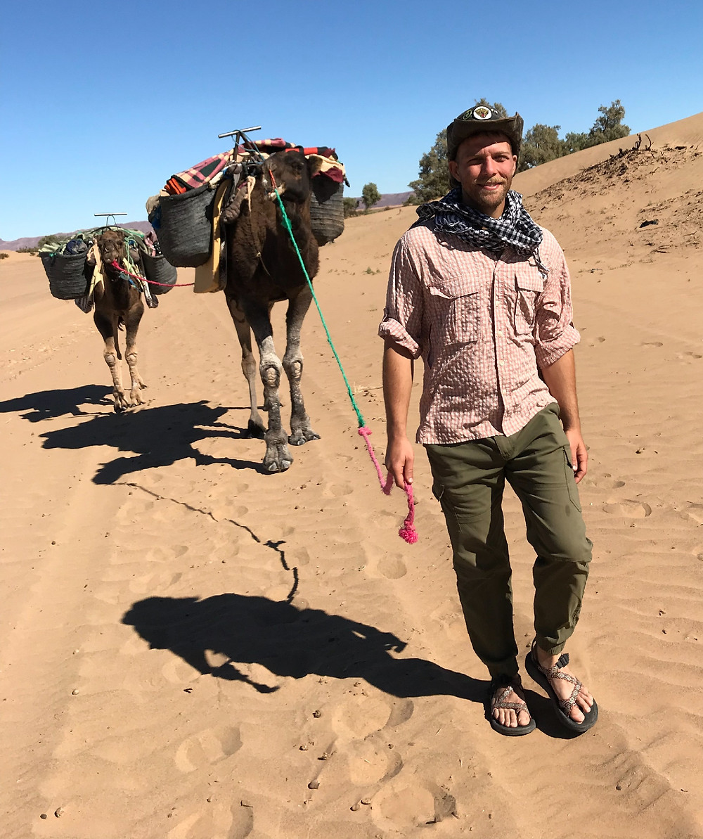 Leading camels to a desert camp in the Sahara