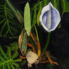 Flor de Uruguay