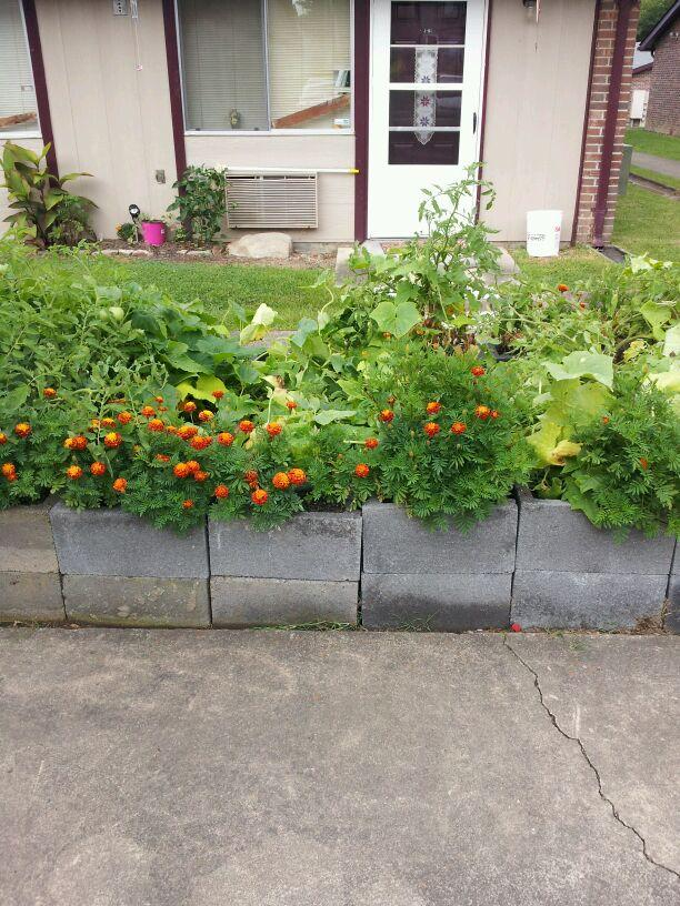 Neighborhood Container Gardens
