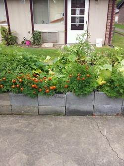 Neighborhood Container Gardens