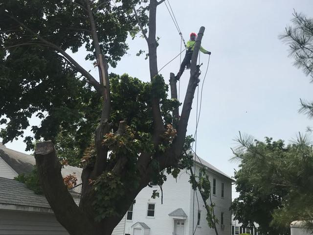 Tree Trimming Rhode Island