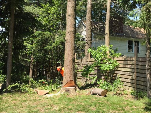 Tree Removal Rhode Island