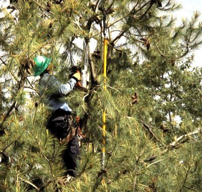 Tree Pruning Rhode Island