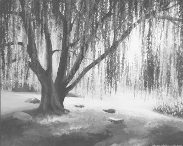 willow%20tree%20oil_edited.jpg