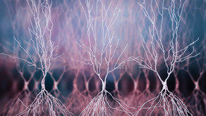 Fixed Engrams and Neural Dynamics