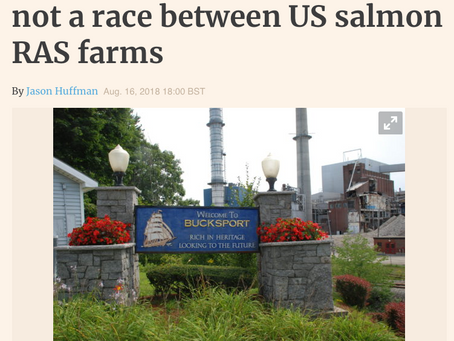 Undercurrent News: Whole Oceans' Willauer: It's not a race between US salmon RAS farms