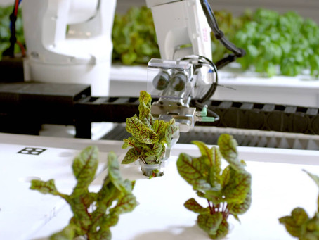 How is Machine Learning used in Agriculture?