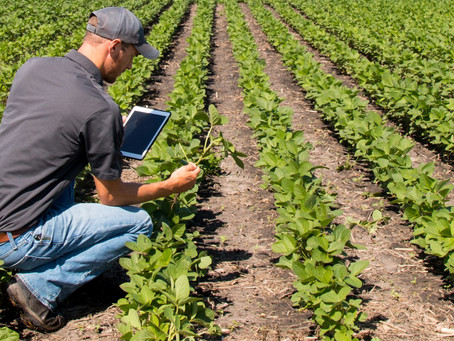 IoT Technology in Agriculture