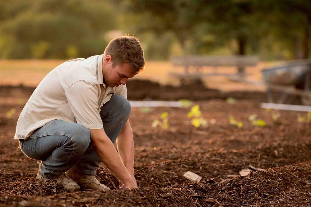 Farmer planting crops