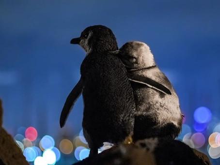 Captan una imagen de dos pingüinos abrazados mirando al horizonte