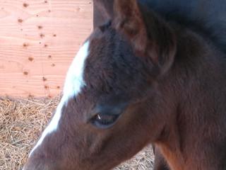 New Foal
