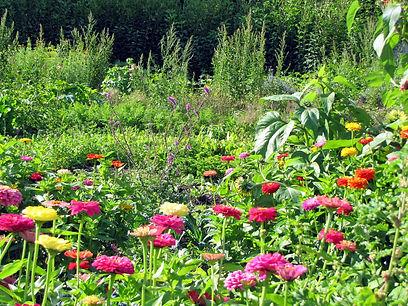 SG Produktionsgarten Blumen red.jpg