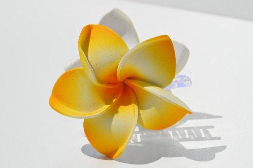 Double grandes fleurs de frangipanier