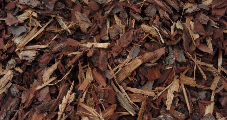 Pinebark 25ml