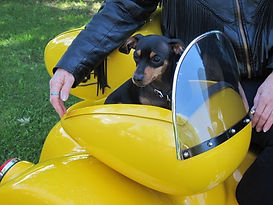 Service Animal Pet Carriers Motorcycles Trikes