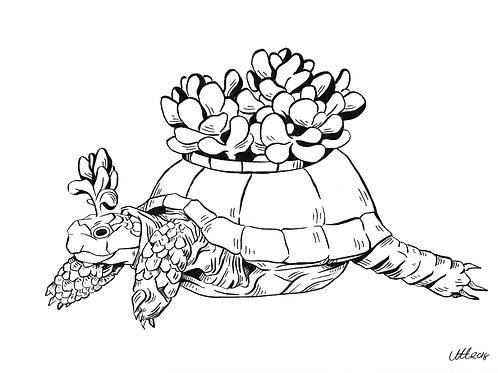 Succulent turtle
