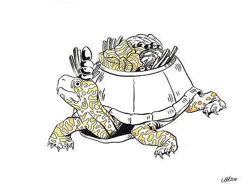 Poké turtle