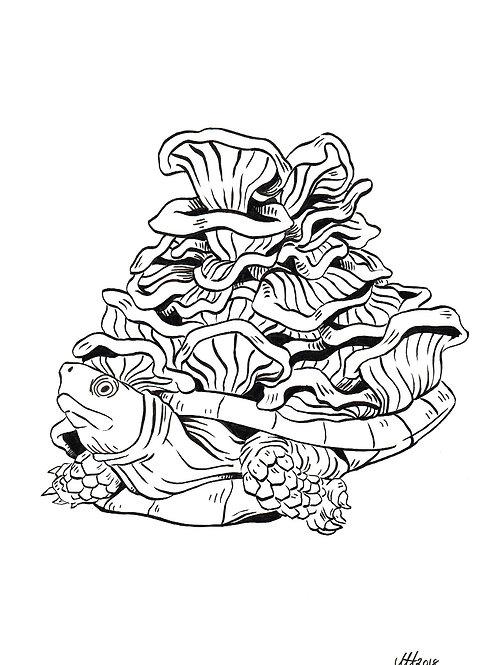 Chanterelle turtle
