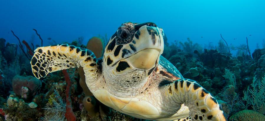Scuba the World - Best Places to Dive