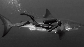 Film Oceans - documentaire de Jacques Perrin