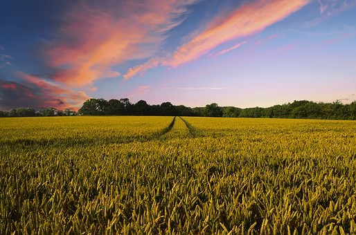 Climate-smart agriculture: the solution to a second green evolution?