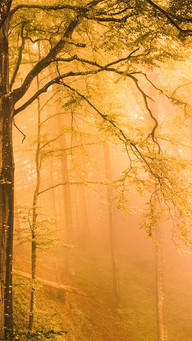 Autumn Dreamy Forest