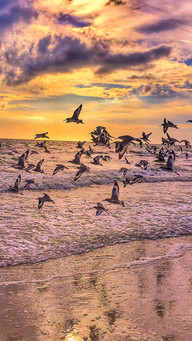 See Waves Purple Light, Sunset, Seagulls