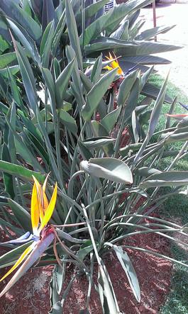 Casa de Dom Inacio Garden Garden Yellow Tropical Flower