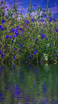 Perfect Blue Shades From The Nature