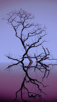 Blak Branches Blue Sky and Reflection