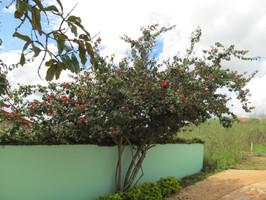 Casa De Dom Inacio Garden Outside Bloomed Tree