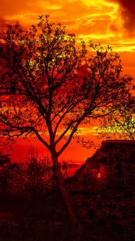 Wallpaper Dark Tree Near Ruins Old Wall Sunset