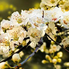 BlossomDelicate 1200&1200.jpg