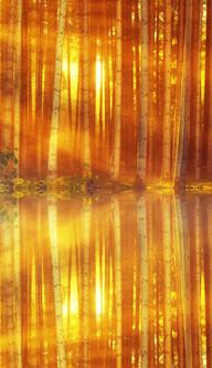 Autumn Sun Through The Trees