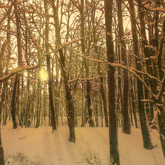 WinterScenery 2500&2500.jpg